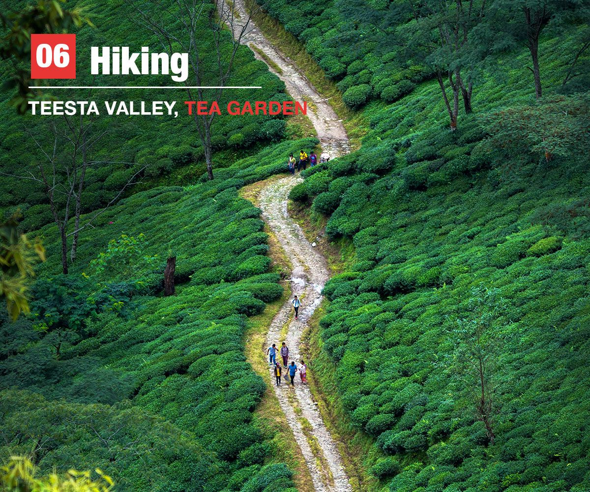 hiking, teesta valley, teagarden