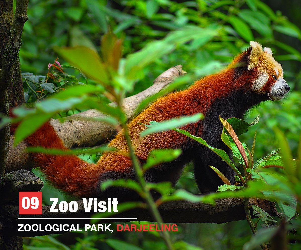 zoo, Darjeeling